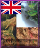 Feminized Seeds Co British Outdoor Mix 10 Fem